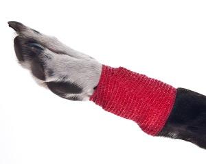 Animal Cohesive Bandage